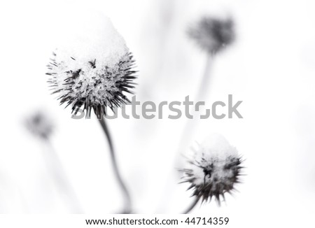 Thistles covered in snow - stock photo
