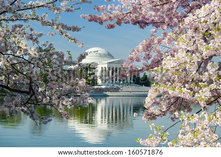 Thomas Jefferson Memorial during Cherry Blossom Festival in spring - Washington DC, United States  - stock photo
