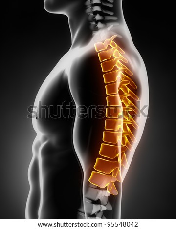 Thoracic spine anatomy left lateral view - stock photo
