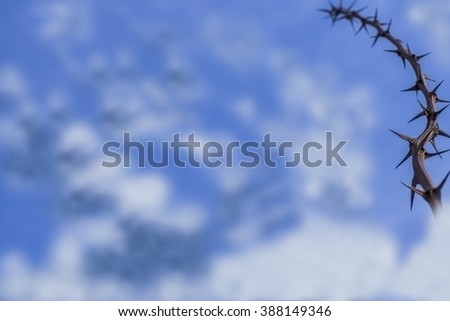 Thorns on the sky 3. - stock photo