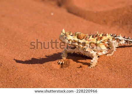 Thorny Devil - stock photo