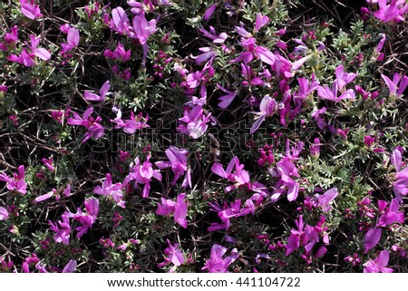thorny wild flowers   - stock photo