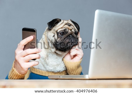 Thoughtful pug dog with man hands in sweater using laptop and cell phone over grey background - stock photo
