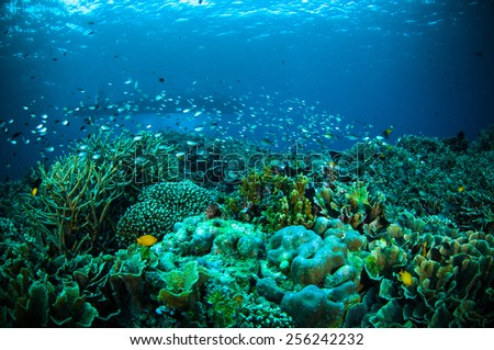 thousand fish below boat bunaken sulawesi indonesia underwater photo - stock photo