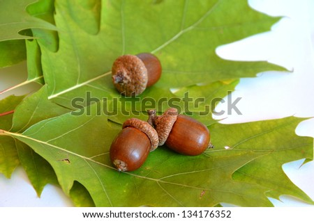 Three acorns next to the oak leaf on white background - stock photo