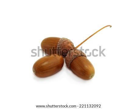 three acorns of oak isolated on white background - stock photo