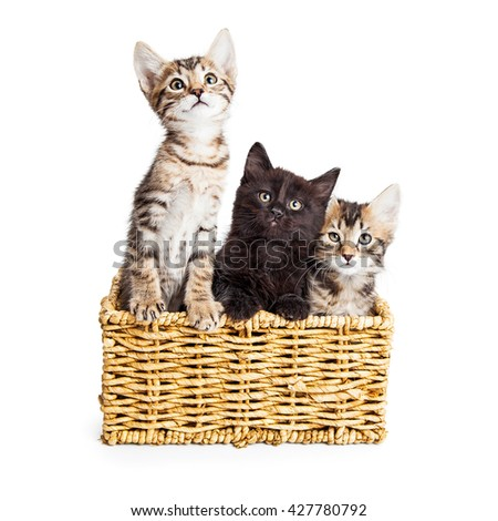 Three adorable kittens together in a wicker basket