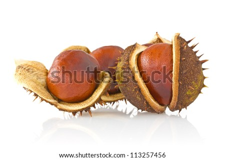 Three autumnal chestnuts over a white background