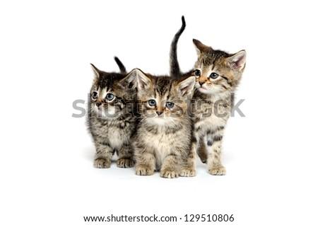 Three baby tabby kittens standing on white background - stock photo