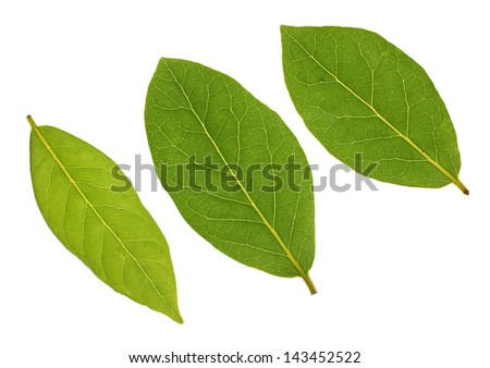 Three Bay leaves isolated on a white background