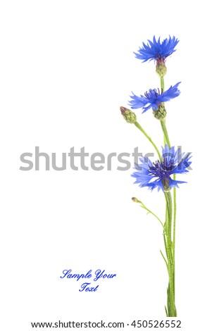 Three beautiful blue cornflower isolated on white background - stock photo