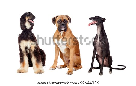 Three beautiful dogs of three different races on a over white background - stock photo