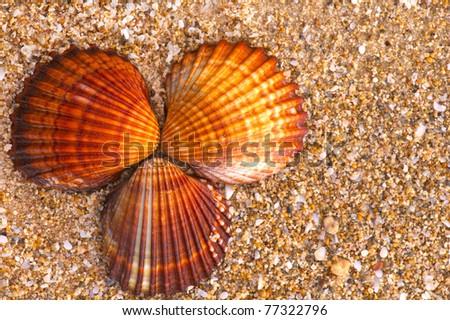 Three beautiful seashells arranged on rough beach sand - stock photo