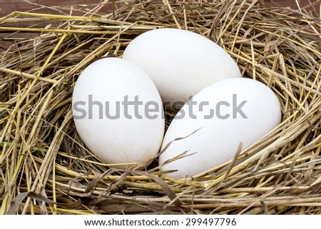 Three big fresh goose eggs in a nest of hay . Selective focus - stock photo