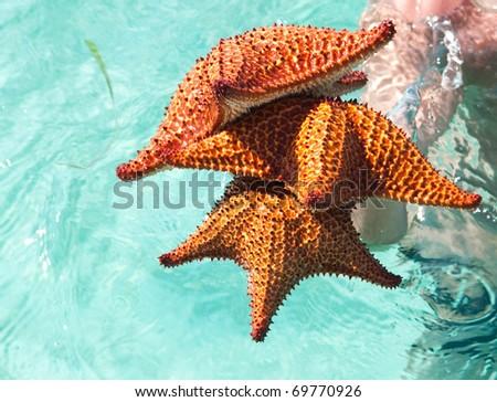 Three big starfishes - stock photo