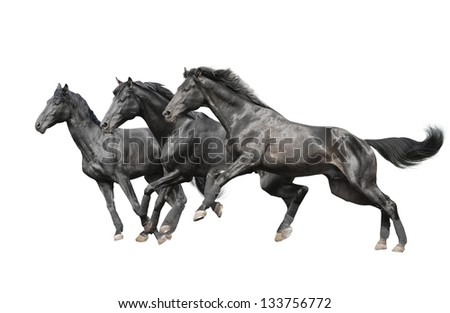 three black horses on white - stock photo