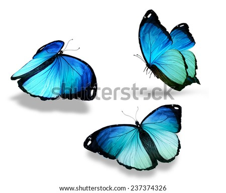 "Three blue butterfly ""morpho"", isolated on white - stock photo"