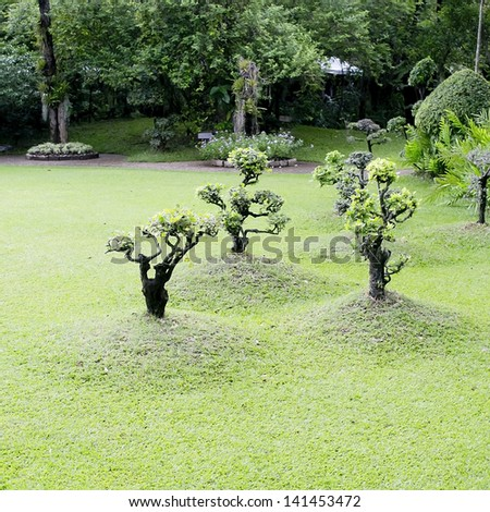 Three bonsai in the garden - stock photo