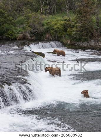 Three Brown Bears at Brooks Falls - stock photo