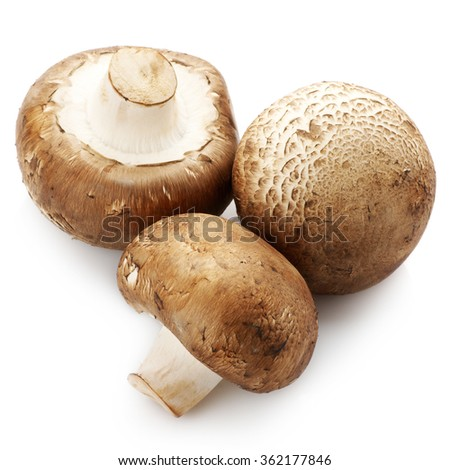 Three brown cap mushrooms isolated on white background. - stock photo
