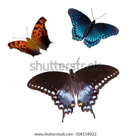 Three butterflies on a white background with a clipping path. - stock photo