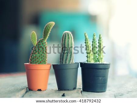 Three Cactus plant in flowerpot ,Houseplant Concept - vintage filter. - stock photo