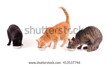 Three cats eating from silver bowls, on white