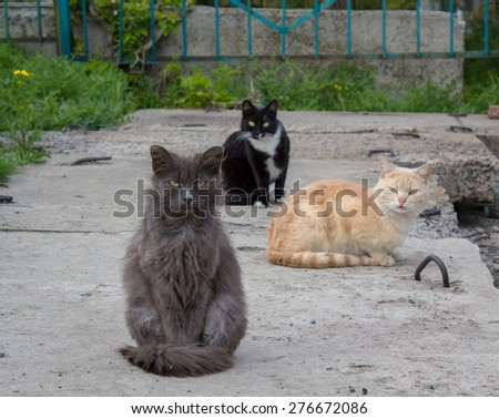 Three cats left homeless shelter in search of food - stock photo