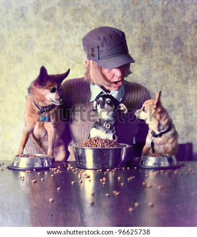 three chihuahuas at the dinner table with a person - stock photo