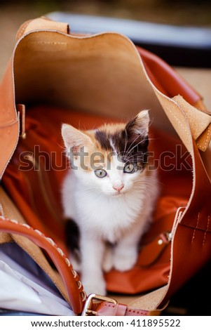 three-colored cute kitten sitting inside a large leather bag