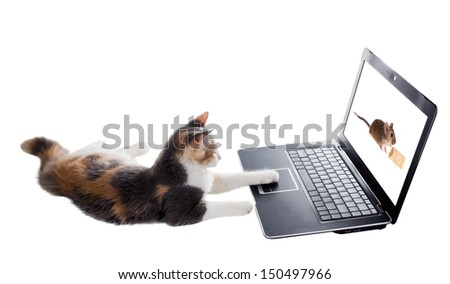 Three-colored kitten lying lazily around a laptop and plays the game with a mouse - stock photo