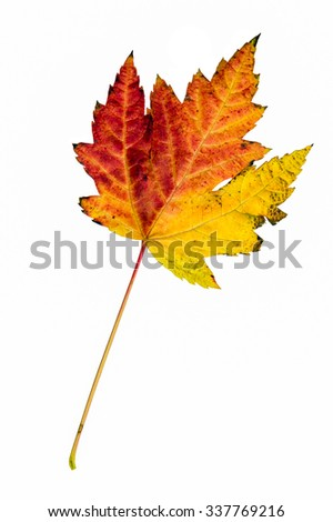 Three-Colored leaf isolated on white background - stock photo