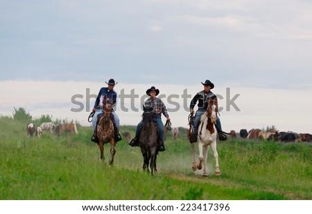 Three  cowboys drive herd of horses across the field - stock photo