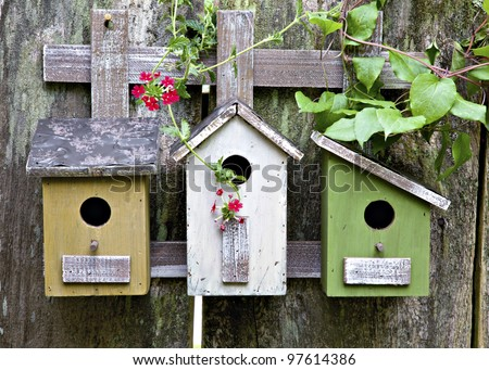 Three cute little birdhouses on rustic wooden fence with beautiful vines and red  blooms on them - stock photo