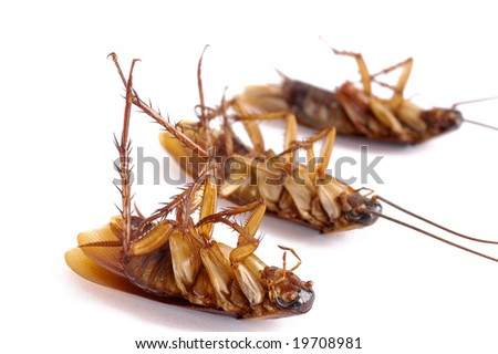 Three dead cockroaches with selective focus