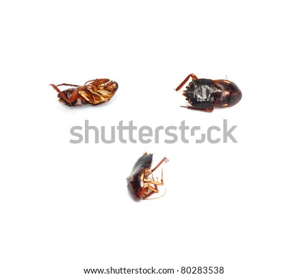 Three dead cockroaches with selective focus - stock photo