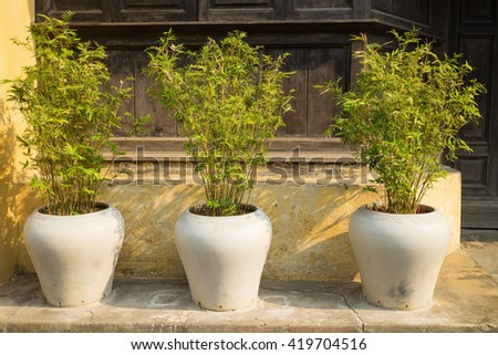 Three decorative bamboo tree pots in front of old house - stock photo