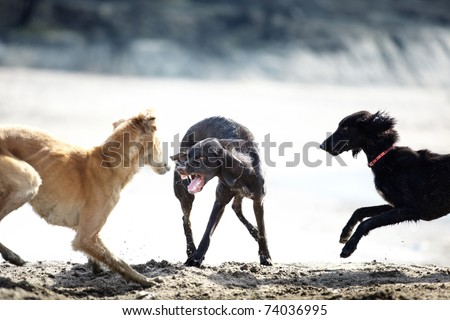 Three dog playing and fighting outdoors. Natural colors and light - stock photo