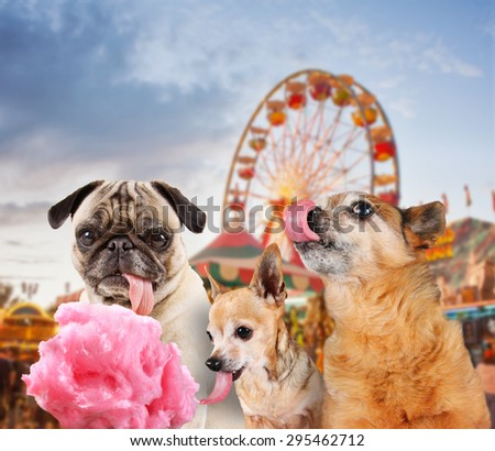 three dogs at a carnival of fair eating pink cotton candy  - stock photo