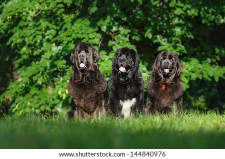 Three dogs on a summer outing - stock photo