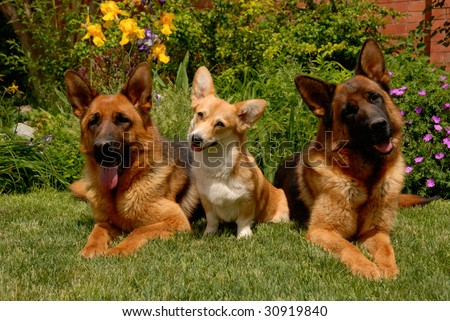 Three dogs on the grass - stock photo