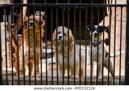 Three dogs say Hi in cages.dog behind the fence