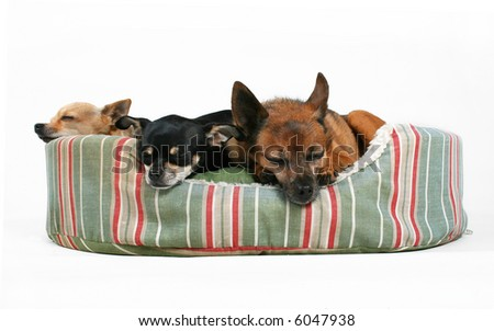 three dogs sleeping in a pet bed