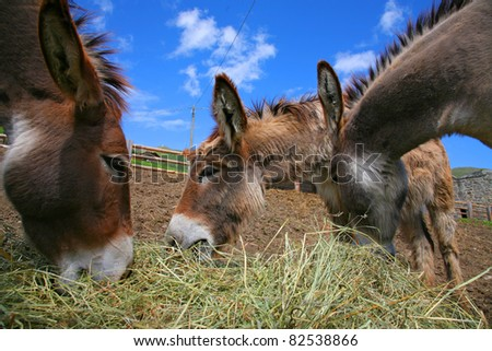 Three Donkey in a Field in sunny day, animals series - stock photo