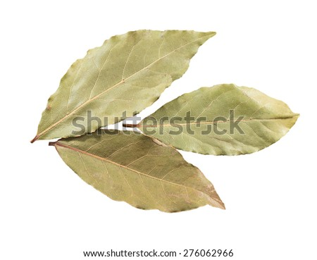 Three dried bay leaves, isolated on white