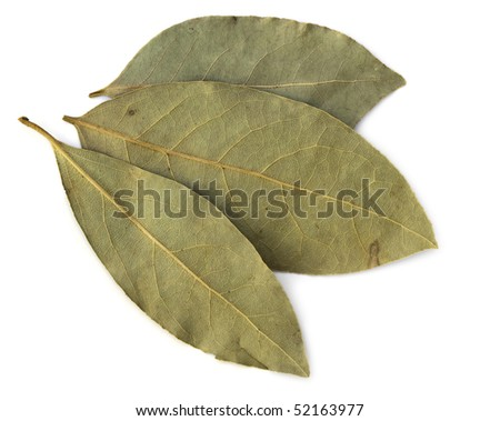 Three dried bay leaves, isolated on white background.