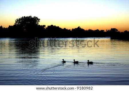 Three Duck Sunset - stock photo
