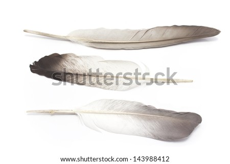 Three feathers isolated on white - stock photo