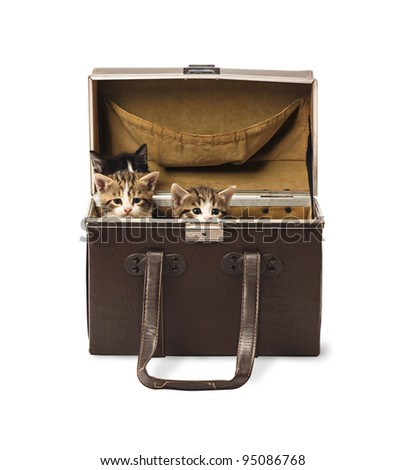 Three few weeks old kittens hiding in retro traveling box isolated on white background