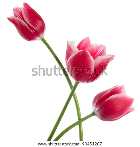 Three fine flowers isolated on white - stock photo